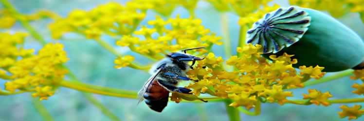 Arı sütü ile sağlıklı ve uzun yaşam