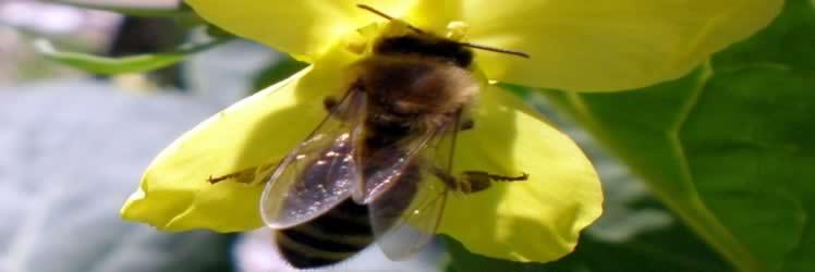 Arılar için alarm zilleri çalıyor
