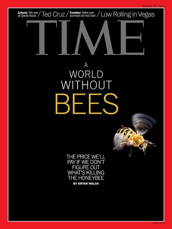 Arıların olmadığı bir dünya (Time Dergisinden)