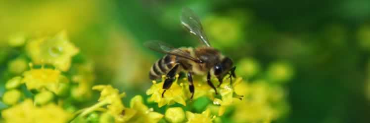 Arı Ürünlerinin Karaciğer Hasarını Önlemedeki Rolü Nedir?